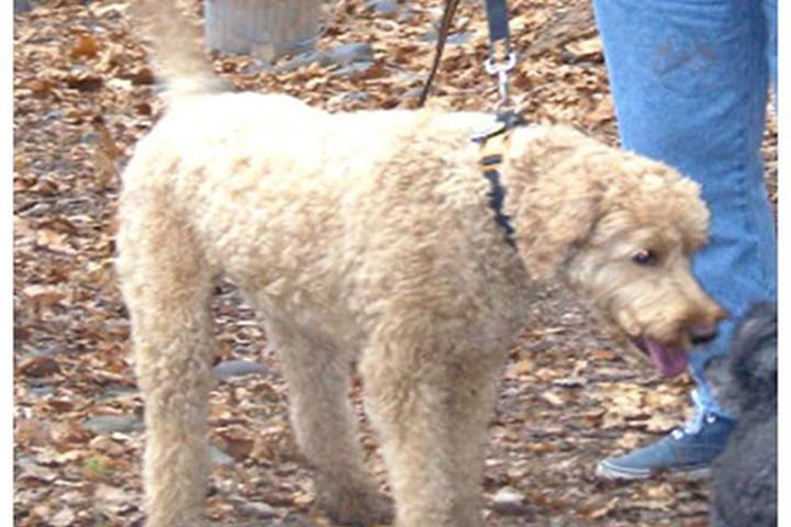 Pet Friendly Woodstock Dog Park