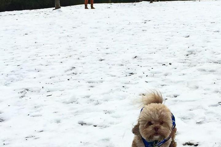 Pet Friendly Cary Dog Park