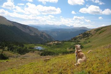 Pet Friendly Colorado Mines Peak