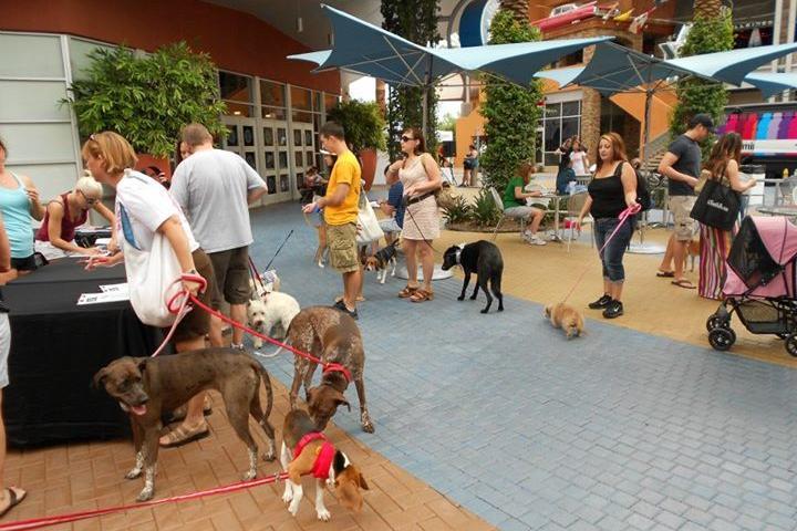 Pet Friendly Tempe Marketplace