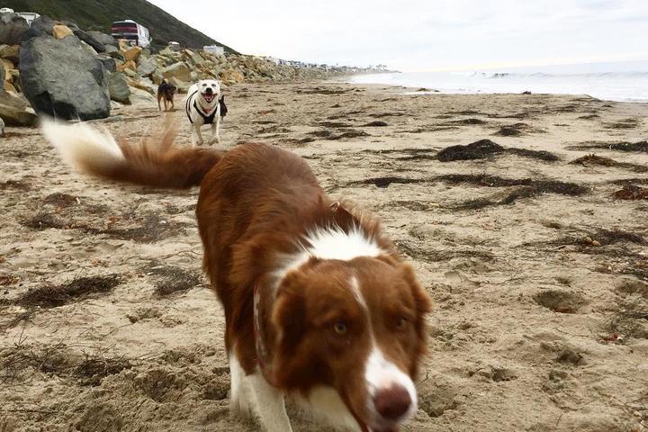 Pet Friendly Seacliff State Beach