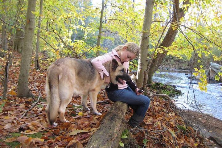 Pet Friendly Ridley Creek State Park