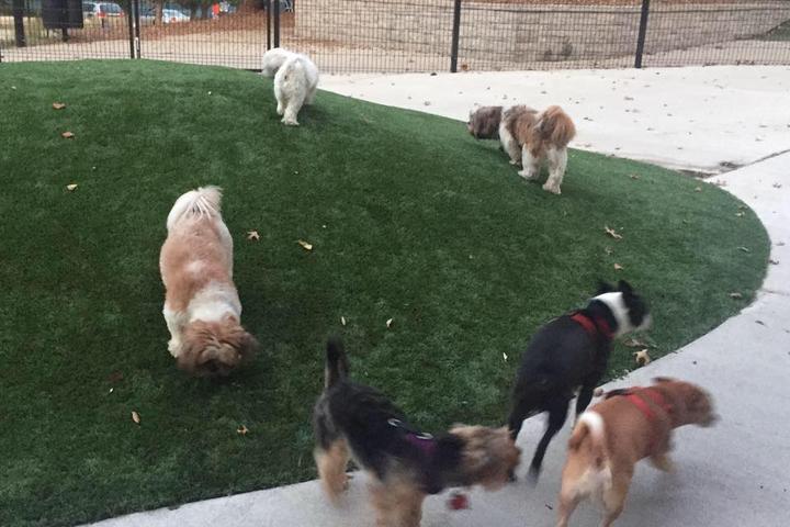 Pet Friendly Ellsworth Dog Park