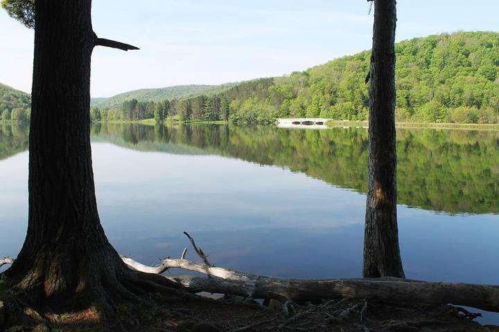 Pet Friendly Allegany State Park