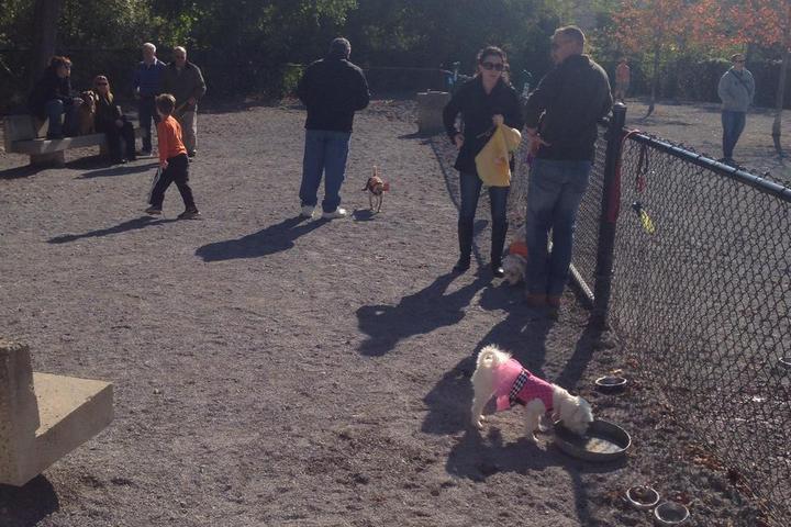 Pet Friendly Bark Dog Park