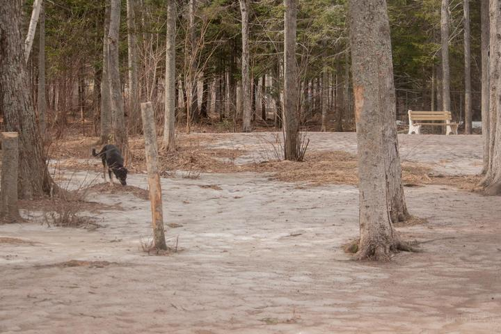 Pet Friendly Centennial Park Dog Park