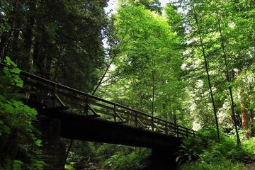 Pet Friendly The Forest of Nisene Marks State Park