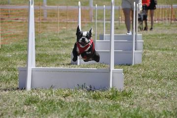 Pet Friendly Turbo Paws Flyball Club
