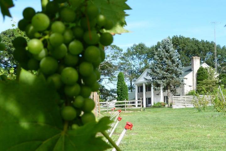 Pet Friendly Southwind Vineyard & Winery