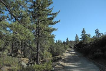Pet Friendly Thomas Mountain Trail