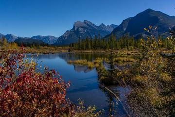 Pet Friendly Banff National Park