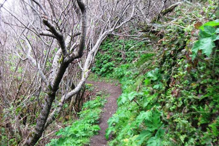 Pet Friendly Humbug Mountain State Park
