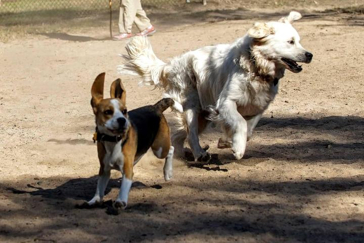 Pet Friendly Chapel Hill's Southern Dog Park