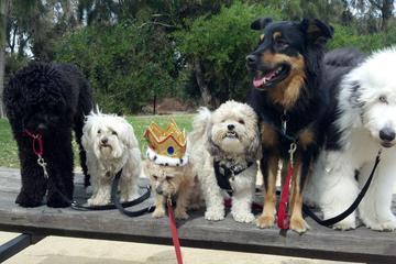 Pet Friendly Joinville Park
