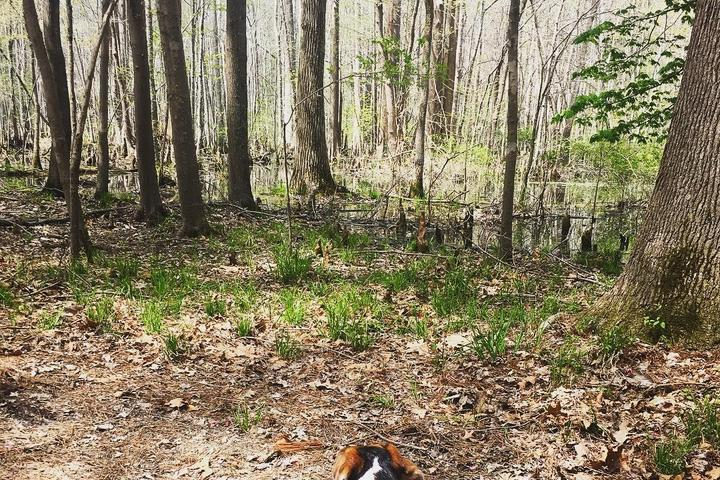 Dog Friendly Hiking Trails in Virginia Beach, VA - Bring Fido
