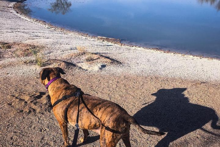 Pet Friendly Agua Caliente Park