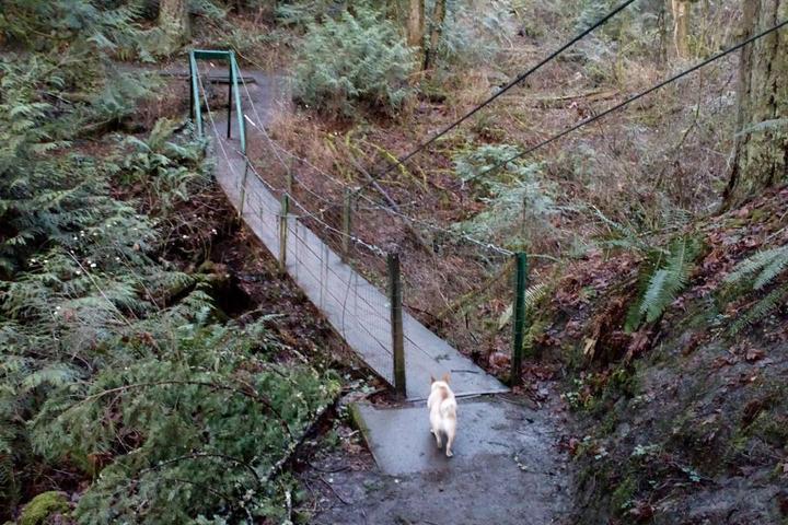 Pet Friendly Tryon Creek State Park