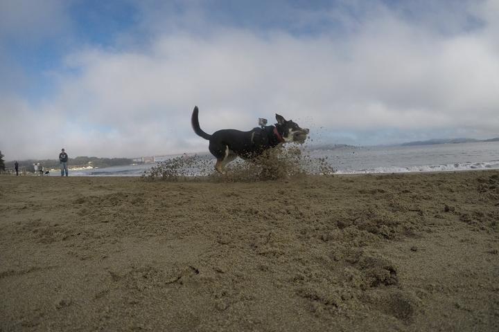 Pet Friendly Flying Furbaby photos at the Golden Gate