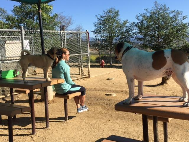 Dog Friendly Parks In San Clemente