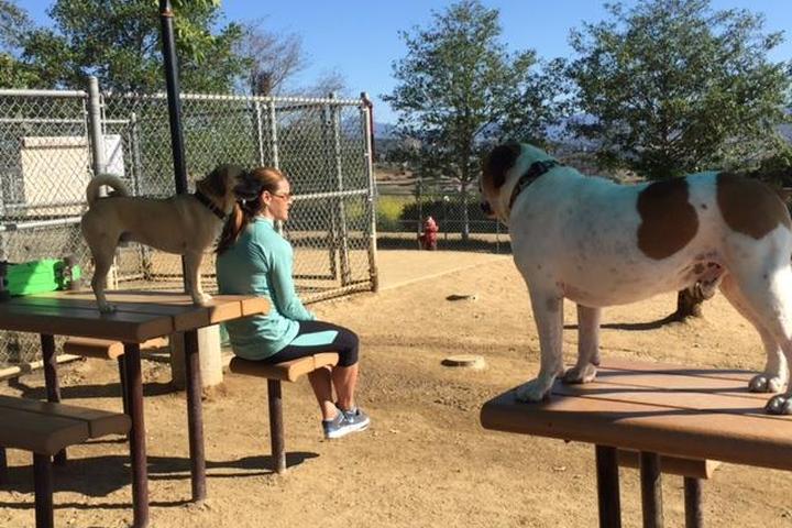 Pet Friendly Baron Von Willard Memorial Dog Park