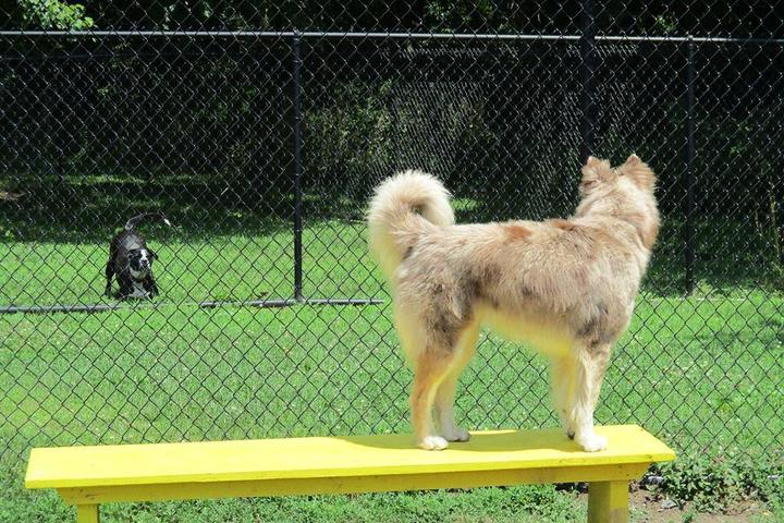 Pet Friendly Kingston Point Dog Park