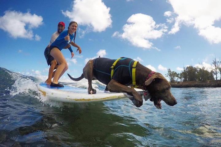 Pet Friendly Hawaii Surf Dogs