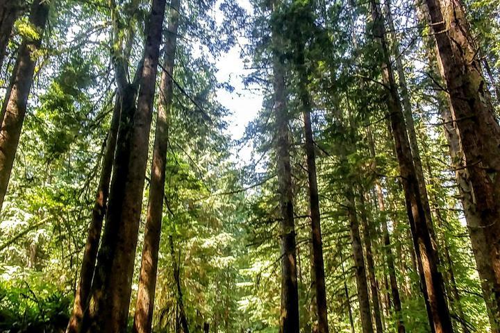 Pet Friendly Rainforest Wilderness Walk