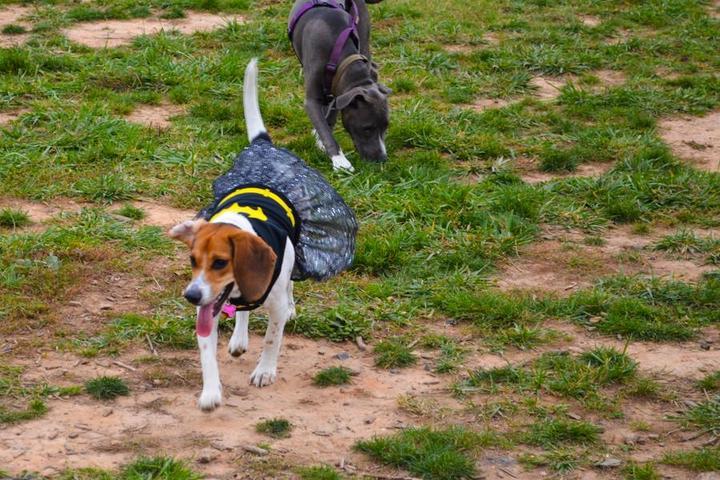 Pet Friendly Manassas Park Dog Park