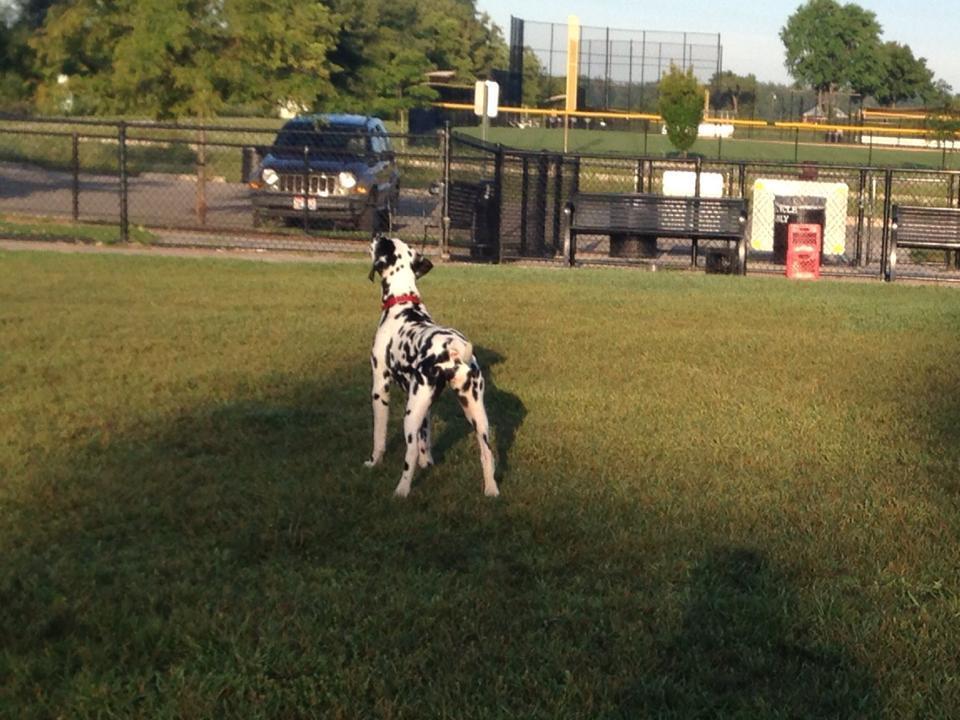 Dublin Dog Park Ohio
