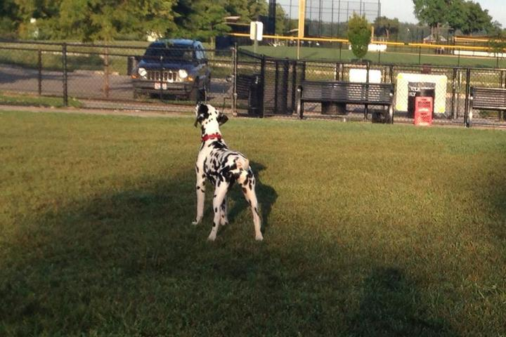 Pet Friendly Nando's Dog Park at Darree Fields Park