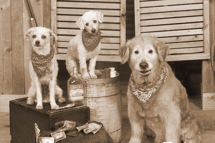 Pet Friendly Jackson Hole's Old Time Photos