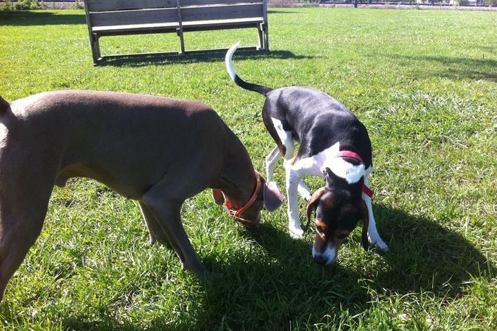 Pet Friendly Kaufman Dog Park at Kennedy Park