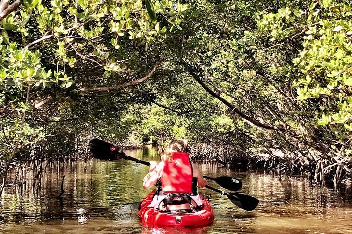Pet Friendly Mangrove Tunnel Kayak Eco Tour