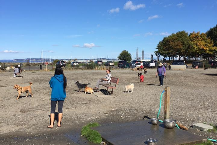 Pet Friendly Edmonds Marina Beach Off-Leash Dog Park