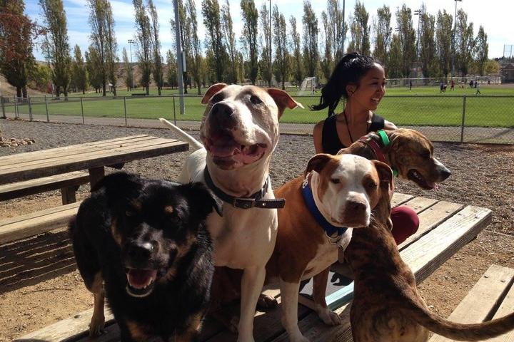 Pet Friendly Phenix Dog Park