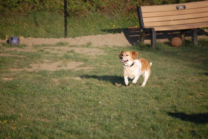 Pet Friendly New Fairfield Dog Park