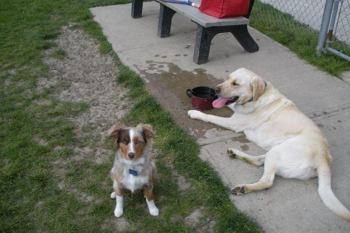Pet Friendly Bowling Green Dog Park