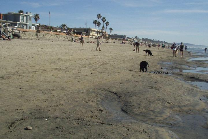 Pet Friendly North Beach (Dog Beach)