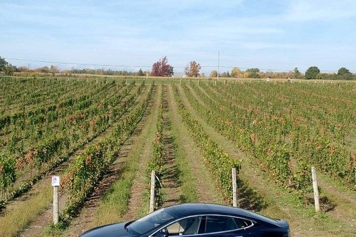 Pet Friendly Tesla Wine Tour
