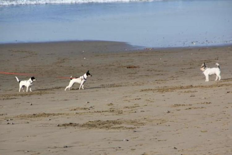 Picture of Pacifica State Beach, a dog friendly attraction in Pacifica.