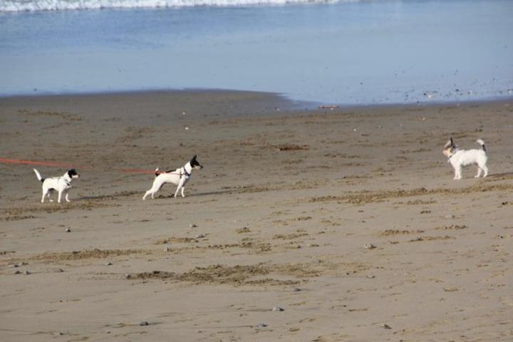 Pet Friendly Pacifica State Beach (Linda Mar)