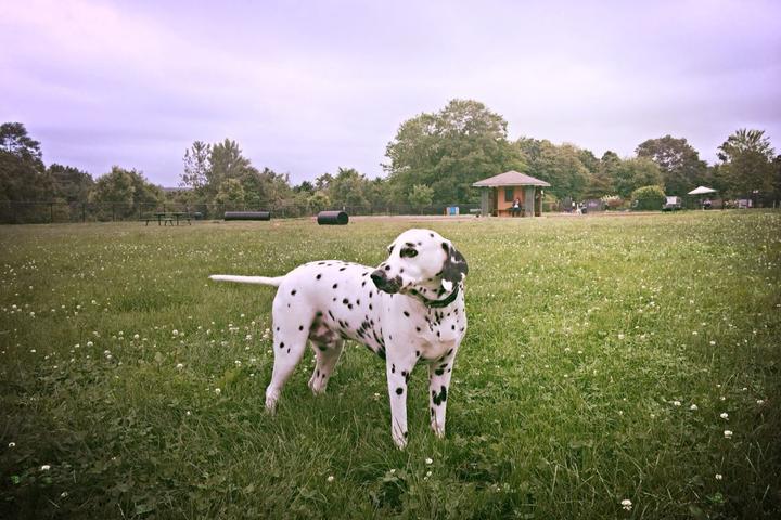 Pet Friendly Pawsitive Park