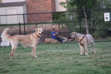 Pet Friendly Irving Dog Park