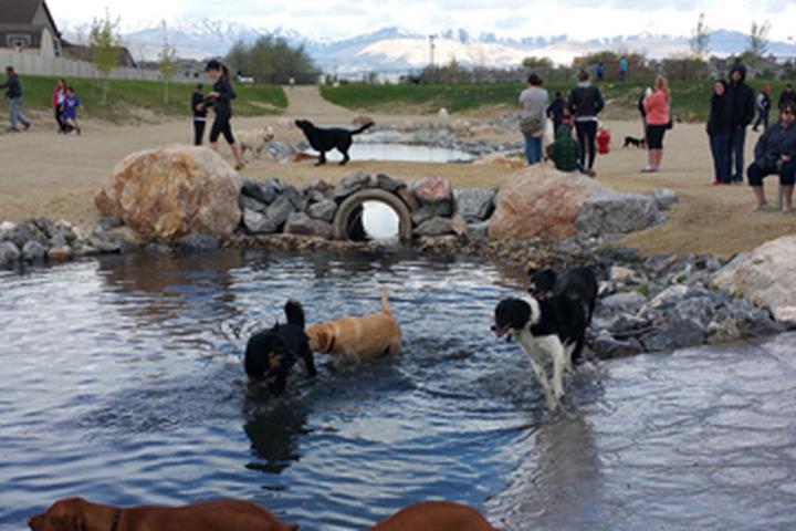 Pet Friendly Dayland Dog Park