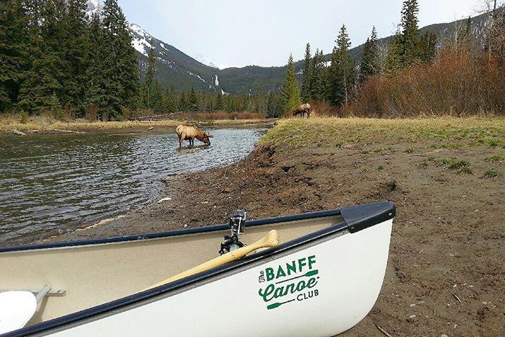 Pet Friendly Banff Canoe Club