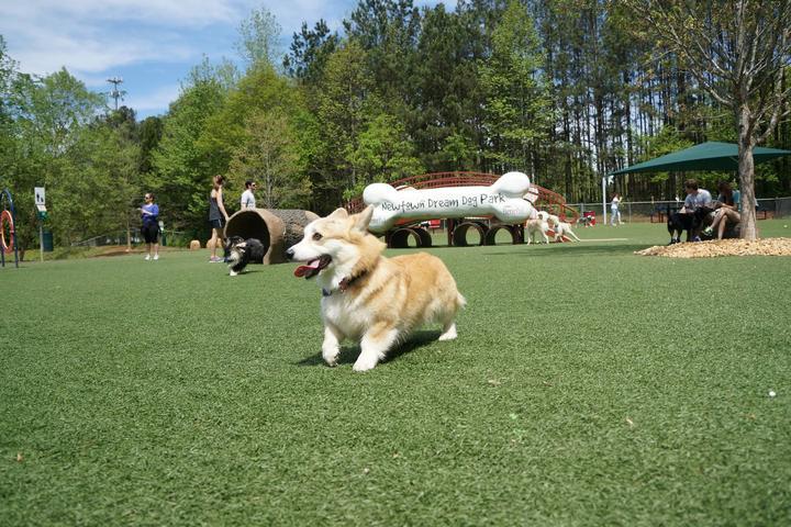 Pet Friendly Newtown Dream Dog Park