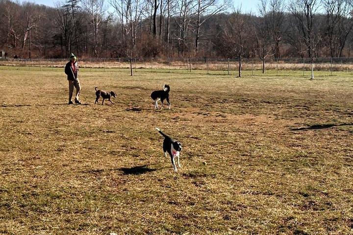 Pet Friendly Morris Broadband Dog Park