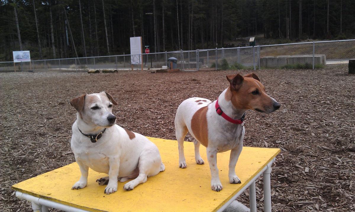 Newport Fenced Dog Park