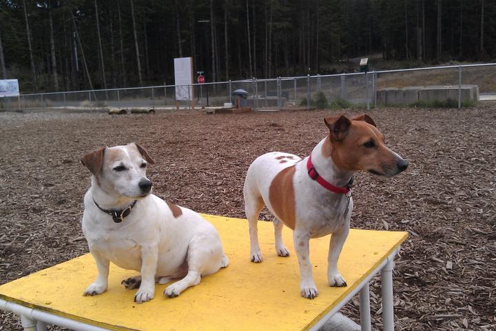 Pet Friendly Wilder Dog Park