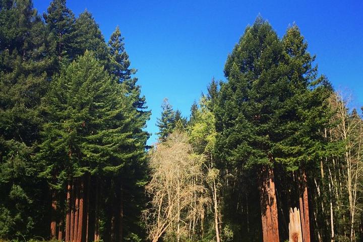 Pet Friendly Redwood Park